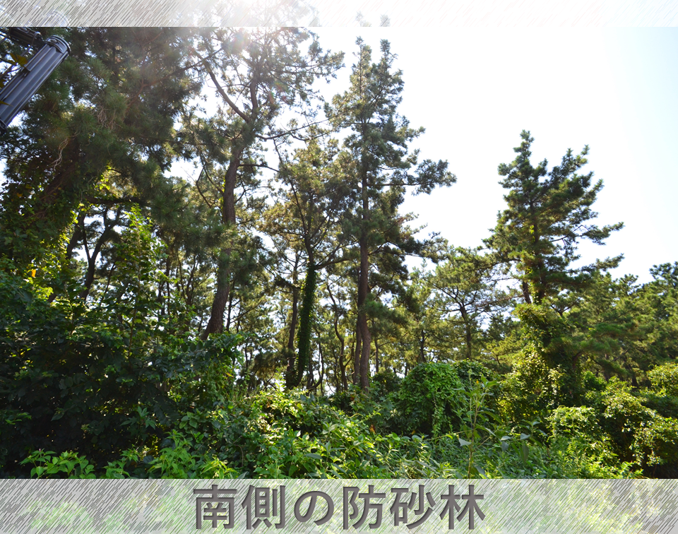 A image of 南湖6丁目 売地